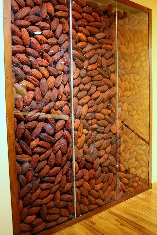 Fave di Cacao lungo il percorso del museo
